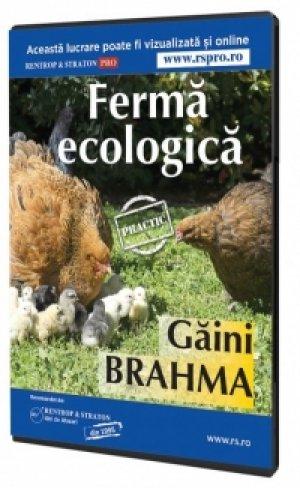 Ferma ecologica de gaini Brahma