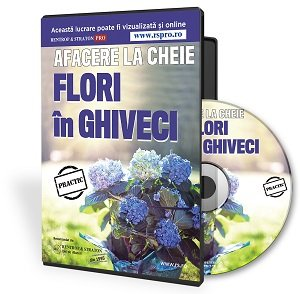 afacere flori in ghiveci